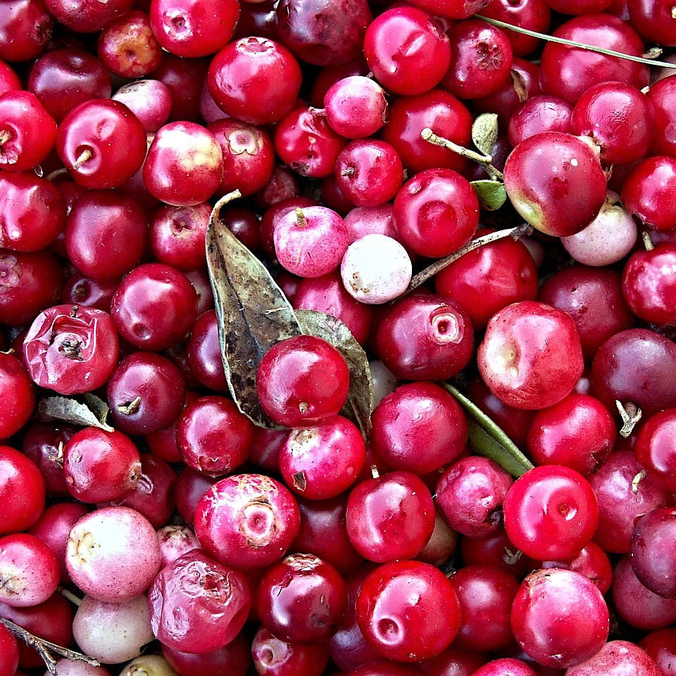Cranberries sweetened organic whole - 5000g