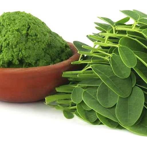 Moringa (Ben Tree) leaves powder - 1000g